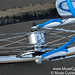 Muse Cycles Mezzaluna Mixte @ UCSB Beach Front Alfine Dynamo Hub