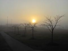 Absolute Patience - Live Life (C. VanHook (vanhookc)) Tags: fog poetry poem latin patchwork waltwhitman henrydavidthoreau emilydickinson cento deniselevertov sistercoritakent breakingdawn 2012366 dailyphoto2012 cloakofpatches