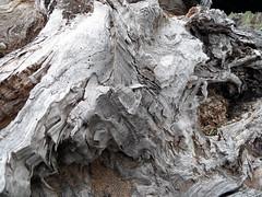Holz (onnola) Tags: wood tree texture germany deutschland weide stem willow stump trunk holz potsdam brandenburg baum hollow salice stamm baumstamm saule golm grube salguero hohl textur kopfweide baumstumpf silberweide whitewillow gehlz salixalba salicebianco sauleblanc sauceblanco potsdamgrube potsdamgolm