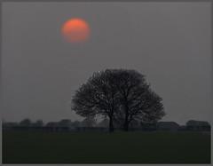 Just before sunset in March (hawkgenes) Tags: uk trees nature landscapes settingsun englishfields colorphotoaward photosinwinter hawkgenes northyorkshirelandscapes landscapesinwinter