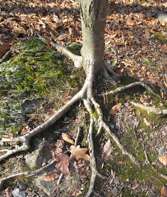 roots on the rock