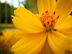 ela (Cu Fotografia) Tags: flower macro little flor lightroom florzinha haloana