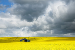 Big Field, Bigger Sky (Stu Meech) Tags: light shadow sky field yellow clouds brewing spring nikon afternoon hill hard stormy rape valley lee dorset 1750 polarizer grad tamron canola rapeseed oilseed 06nd d300s