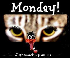 doofy daffy Monday (♫ joyousjoym~ Blessings♥) Tags: blessings fun eyes funny florida mama daffy monday doofy 2014 myown joyousjoym 2014mama