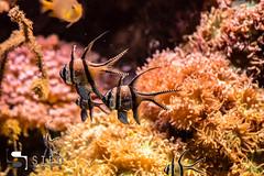 5D__5443 (Steofoto) Tags: genova porto pesci acquario darsena crostacei rettili cetacei molluschi