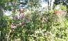 20150822_145159 (Megaolhar) Tags: flores toy flickr do dia vale paulo apa bom inverno são campos facebook tuka jordão paraíba fazendinha 2016 youtube ibama twitter jardinagem bioma gomeral
