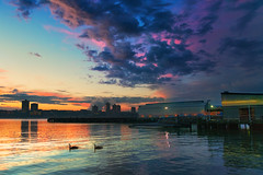 Coast to Coast (Howard L.) Tags: sunset reflection clouds pier geese manhattan westside canonef2470mmf28liiusm sonya7rii ilce7rm2 metabonessmartadapteriv