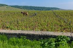 201607389 (Klaus Harbo) Tags: vin bourgogne beaune