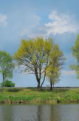Tree (Tova_) Tags: tree nature water grass clouds spring outdoor poland polska wiosna trawa chmury
