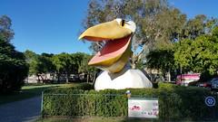 Flat Stanley meets The Big Pelican (Gillian Everett) Tags: school sculpture scale project river australia pelican noosa float flatstanley bigthing thebigpelican