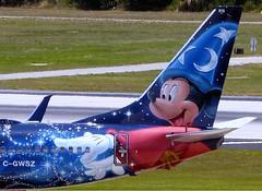 Tail WestJet B737 (Charlie Carroll) Tags: tampa florida tampainternationalairport ktpa