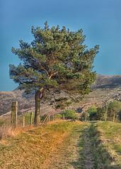 Dovestone hillside (paulnadin) Tags: color 4 pro efex