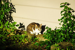 Today's Cat@2016-05-18 (masatsu) Tags: cat pentax catspotting mx1 thebiggestgroupwithonlycats