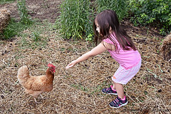 The Chicken Chic (Amanda L Brewer) Tags: chicken ga lily egg byron centerville amandalbrewer