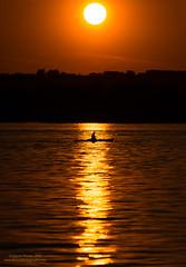 On the Potomac (Dwood Photography) Tags: sunset sun silhouette river virginia washingtondc dc washington kayak va potomac kayaker 2016 dwoodphotography dwoodphotographycom