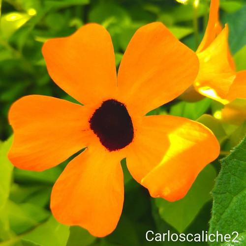El negro... #flower #flowers #love #beautiful #nature #yellow #black #light