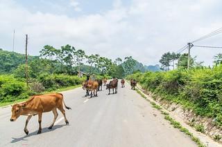 cao bang - vietnam 19