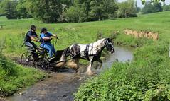 Chester Horse Driving Trials Erddig 10 IMG_7153 (rowchester) Tags: horse water driving carriage chester trials erddig