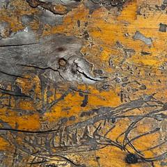 Ptolémée (Gerard Hermand) Tags: 1606092044 texture vernis varnish gerardhermand france paris eos5dmarkii abstract abstraction abstrait bois table wood canon