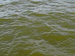 Enjoying the Water & the Wake on the Everglades (soniaadammurray - OFF) Tags: water florida everglades digitalphotography