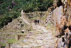 Machu Picchu 2 - 13