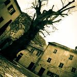 Im a tree