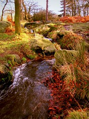 Burbage brook delights in the light (Dazzygidds) Tags: lighting trees leaves katherine boulders mum bracken nationaltrust highlandcattle darkpeak peakdistrictnationalpark moorland burbagebrook timewellspent longshawcountryestate oldchesterfieldroad