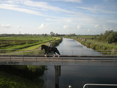 Nederland (Fufulula, thanks for 1 million visits) Tags: horse green nikon nederland 2011 top20bridges