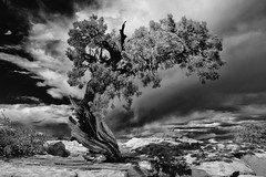 (Gennaro209) Tags: park blackandwhite horse white black tree river point dead utah colorado raw adams state jerusalem national canyonlands ansel