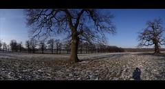 amazing oaks (JoannaRB2009) Tags: blue trees winter sky sun nature sunshine germany landscape hessen meadows natura fields oaks zima niebieski pola hesse słońce przyroda niebo łąki drzewa krajobraz niemcy dęby beberbeck hesja rememberthatmomentlevel1