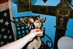 000089530010 (✈ Sean Marc Lee 李子仁) Tags: black bar america fuji taiwan goat weirdo taipei 台灣 台北 silvi bah fuckyeah haveadrink visciouscircle