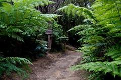Skytrack... (johanfoster) Tags: camping newzealand hike nz southisland doc tramping abeltasman abeltasmannationalpark departmentofconservation marahau abeltasmancoasttrack