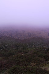 Wistman's Wood in The Mist (i-r-paulus) Tags: moss oak oakwood moor dartmoor moorland wistmanswood twobridges ancientwoodland twistedoak ancientforest pedunculateoak ancientwood stuntedoaks epiphyticmosses ancienthighlevelwoodlands