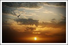 Volando hacia la libertad. (Asturtom) Tags: sunset sky cloud sun sol clouds seagull cielo nubes puestadesol gaviotas gaviota nube volando volar ltytrx5 ltytr2 ltytr1 a3b