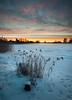 Snowy reed (- David Olsson -) Tags: morning winter mist snow cold reed fog clouds sunrise landscape dawn early haze nikon cloudy sweden sigma karlstad klarälven february 1020mm 1020 2012 frozenriver värmland sjöstad d5000 davidolsson 2exposuremanualblend ginordicfeb12