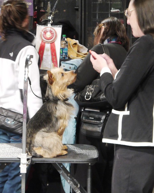 Westminster DOG SHOW_27