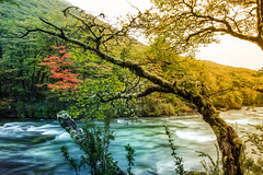 The River Wild (Stuck in Customs) Tags: travel wild panorama orange patagonia mountain mountains cold tree green argentina argentine digital america river outdoors photography blog moss high flora scenery colorful republic dynamic stuck natural hiking wildlife south scenic hike rapids photoblog valley software processing andes april imaging wilderness lush icy frigid range 2009 brilliant hdr repblica tutorial travelblog customs raging argentino hdrtutorial stuckincustoms photographyblog stuckincustomscom nikond3x