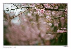 leica_n_828_M75F14_xtra400 (OPTIK AXIS) Tags: camera leica film taiwan fujifilm 135  rf leicacamera  fujicolor  xtra400 summiluxm   colornegativefilm      mp85   m