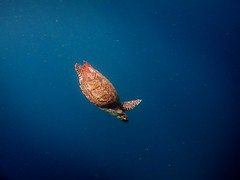 DAY 42 (Dave polonowski) Tags: canon island exotic maldives g11 vilamendhoo
