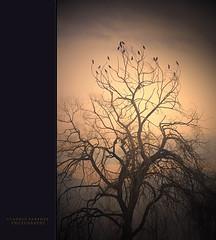. L E G I O N E . (La struttura dei pensieri) (swaily ◘ Claudio Parente) Tags: nikon soul anima d300 miraggio ortucchio nikond300 claudioparente swaily checchino bestcapturesaoi mygearandme galleryoffantasticshots