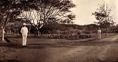 Park in Batavia ontworpen door de Geer Boers (Indische Verhalen) Tags: batavia indische verhalen