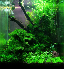 ... tank shrimp cube nano aquascape aquaristik 30l aquascaping dennerle
