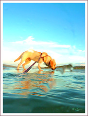 In a Dream (thedaner) Tags: ocean from park new blue sky dog pet motion blur color reflection green love beach water smile animal yellow clouds river catchycolors puppy lumix blurry saturated sand friend lab labrador yellowlab shoot waves florida indian dunes retriever best atlantic panasonic inlet labradorretriever hip splash bestfriend lupus ponce atlanticocean smyrna howie shootfromthehip splashing indianriver canis familiaris ponceinlet iluvmydog canislupusfamiliaris dmczs3