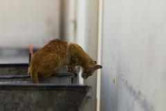 (siraf72) Tags: leica cats cat bahrain stray