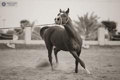 (abduleelah.s.klefah) Tags:                                                    qaafdevgmailcom   2012usingacanoneos5dmarkii thisphotowastakenonmarch6