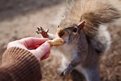 Soooo excited for PEANUT! Explored! (Dean Ruben.) Tags: park squirrel hand peanut feed bostoncommon highqualityanimals