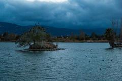 IMG_2727.jpg (Sarah and Jason) Tags: california park island pond unitedstates dusk campbell byjason losgatoscreekpark