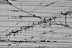 Wild Wires (Le*Gluon) Tags: railroad brussels bw belgium belgique bruxelles tram cables wires d90 tamron18270