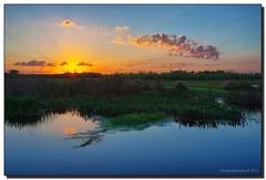 Wetlands Sunrise (Fraggle Red) Tags: morning blue sun green nature yellow clouds sunrise florida wetlands canonef1740mmf4lusm hdr pickerelweed boyntonbeach 3exp greencaywetlands dphdr palmbeachco