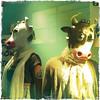 Cowz (Big*Al*Davies) Tags: mobile wales phone pics bigaldavies iphone